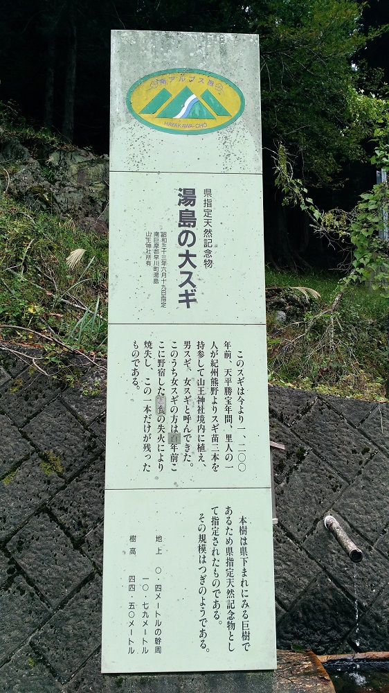 湯島の大杉看板
