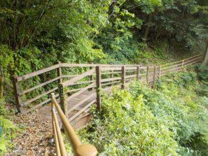桑の木橋全景