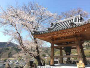 常幸院の桜と鐘