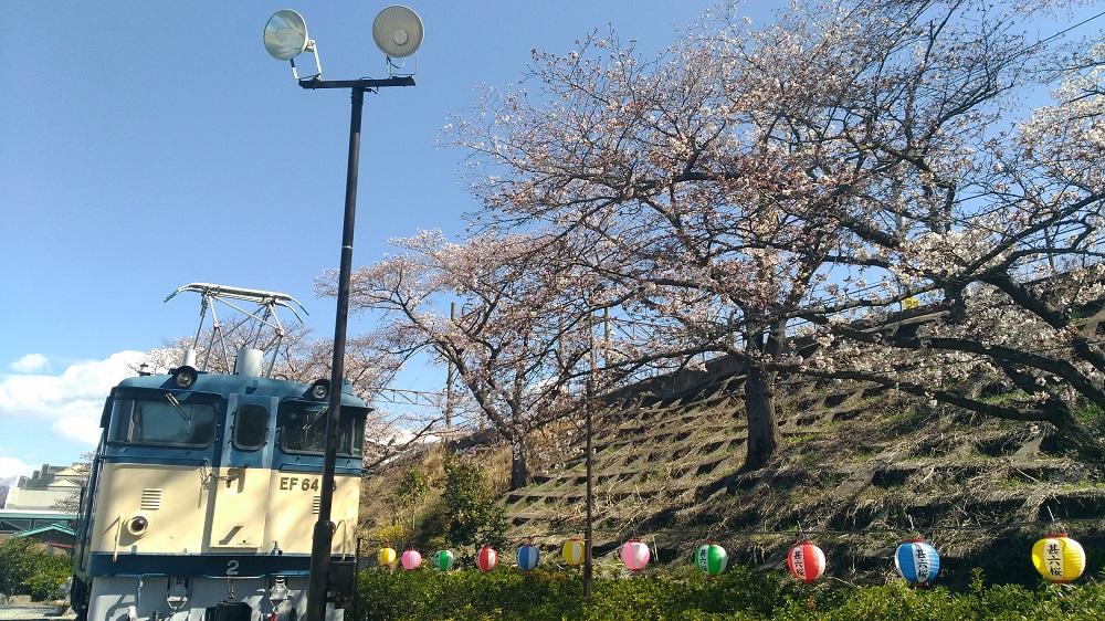 勝沼駅の桜